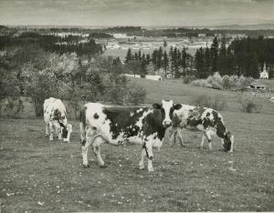 For more than a century, what we now know as Powell Butte had other uses, one of which was as a cattle ranch.