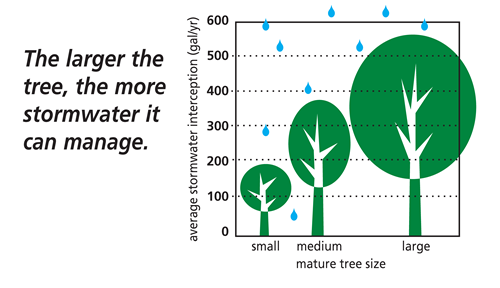 tree stormwater benefits