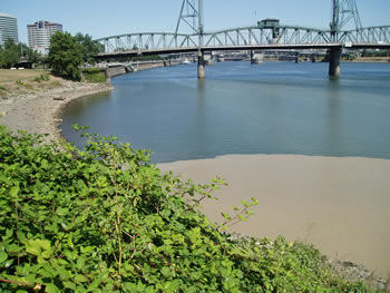 dirty water fouls the Willamette