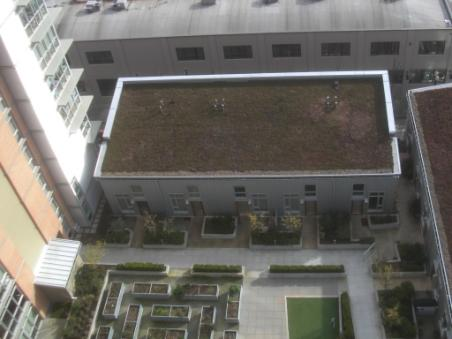 Looking down on the Asa green roofs