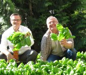 first harvest, Mayor Sam Adams and a volunteer harvesting spinach