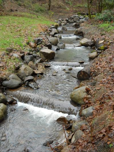 a restored portion of Veterans Creek