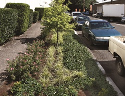 green street in planting strip