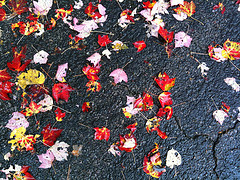 Red leaves on wet pavement