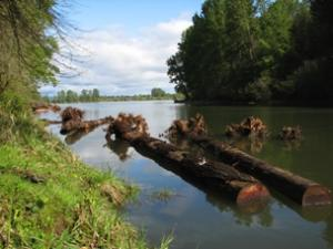 Columbia Slough Confluence Restoration