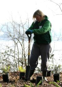 Friends of Trees planting
