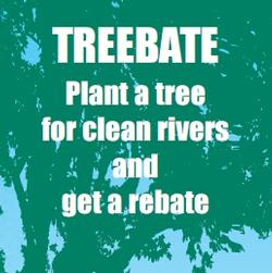 Plant a tree for clean rivers