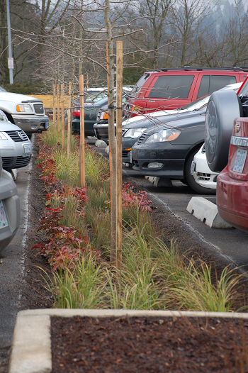 photo of completed TriMet parking lot project