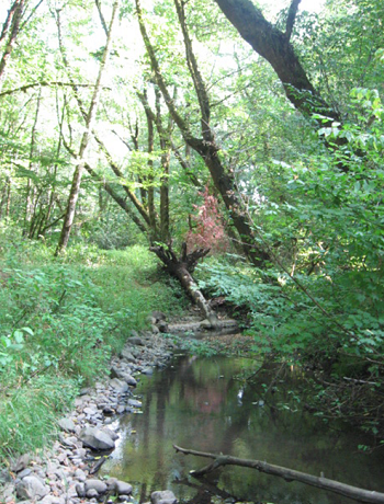 photo of Middle Tryon Creek