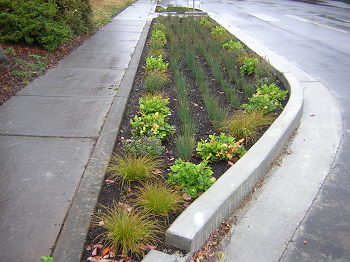 photo of a vegetated curb extension