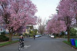 SE 36th Ave and Taylor bikeway
