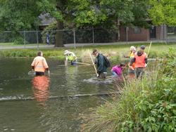 volunteers in Westmoreland Park pond