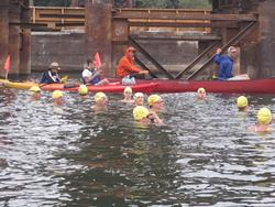 swimmers start under the Sellwood Bridge