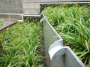 photo of stormwater planter at PSU Urban Plaza