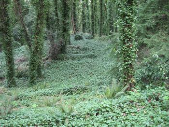 forest covered in ivy