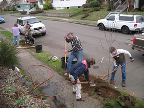 Neighborhood Tree Planting