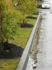 street trees help manage stormwater