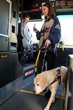Person boarding bus with service animal