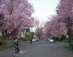 2 people biking on a neighborhood bikeway