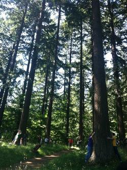 hugging trees at Hoyt Arboretum