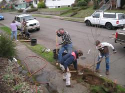 neighbors planting street trees
