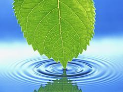 Leaf making ripple in water