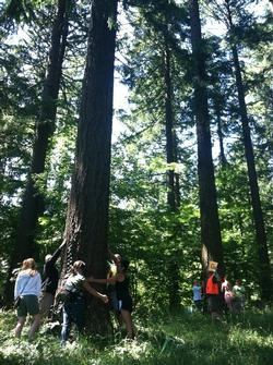 hugging trees in Hoyt Arboretum last year