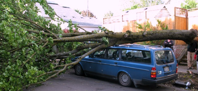 Report A Tree Emergency Tree Concerns The City Of Portland Oregon