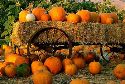 pumkins and hay bales