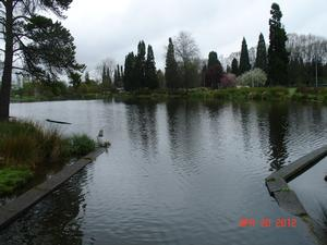 pond before restoration