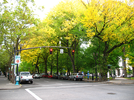 Trees in Chapman Square
