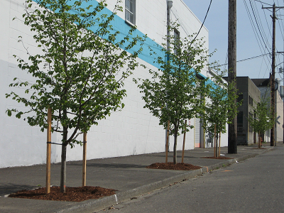 street trees in the Central Eastside Industrial District