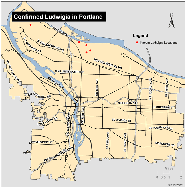 Map of confirmed Ludwigia locations in Portland