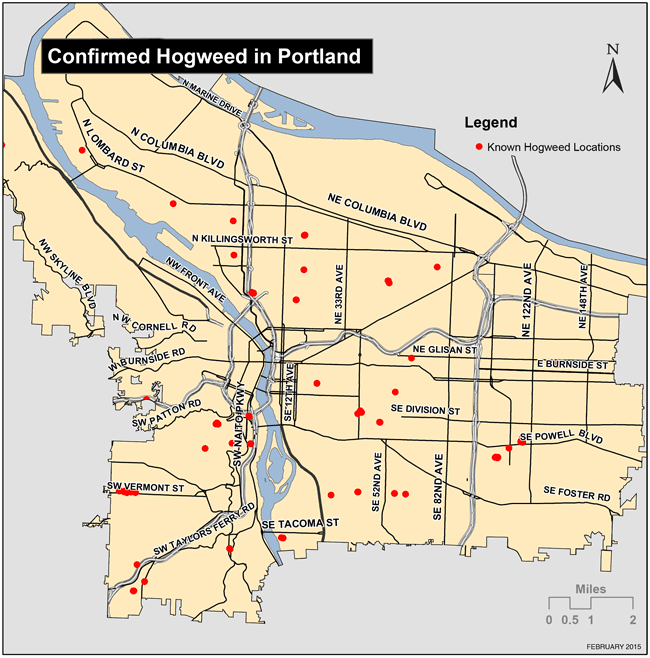 Map of confirmed Hogweed locations in Portland