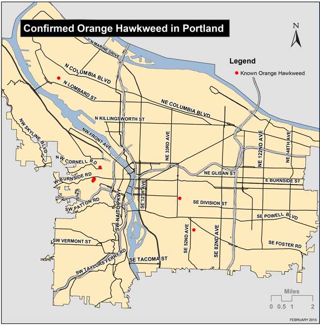 Map of confirmed Orange Hawkweed locations in Portland