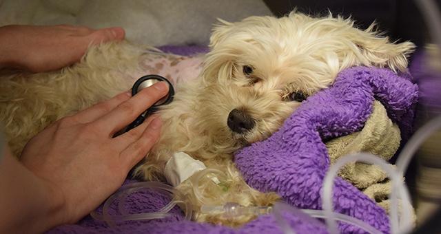 Dovelewis Emergency Animal Hospital Nonprofits The