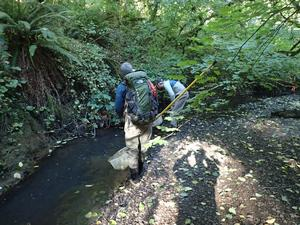 monitoring fish in Tryon Creek