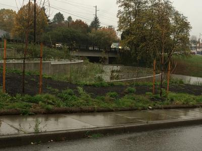 slowing stormwater to filter pollutants