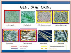 Genera & toxins information presented at workshop