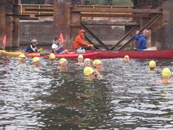 Swimmers in the Willamette River Bridge Swim
