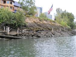 Willamette River bank in Portland