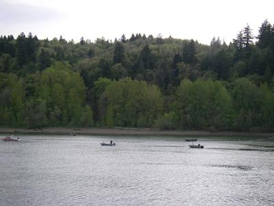 River View Natural Area from the Willamette River