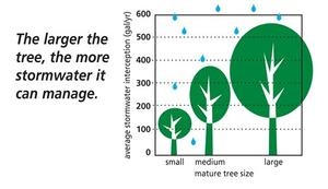 tree size graphic
