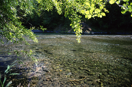 stream with tree canopy