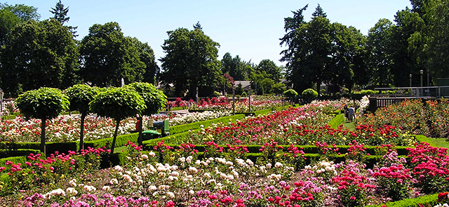 Peninsula Park Rose Garden Preservation Strategy The