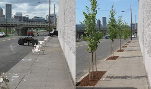 sidewalk before and after tree planting