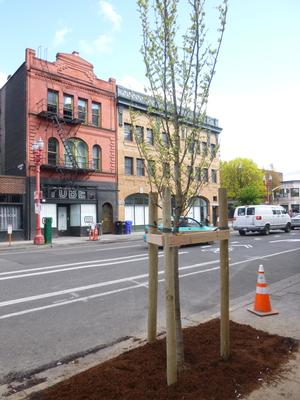 new tree in the central city