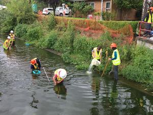 volunteers salvaging mussels from creek