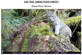 2016 Trail Camera Photo Contest Grand Prize Winner