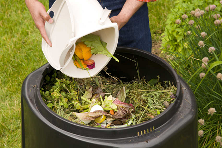Adding food scraps to composter